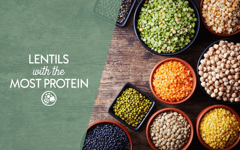Which lentils have the most protein